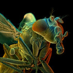 How to Map a Fly Brain in 20 Million Easy Steps